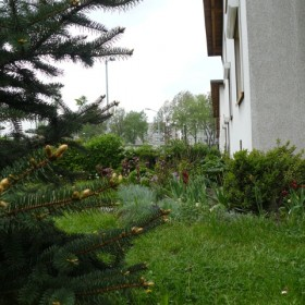 Mój niewielki ogródek.... zamiast balkonu:)))))