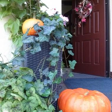 W- jak wrzesień, wrzosy,dynie...