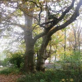 wspomnienie złotej jesieni