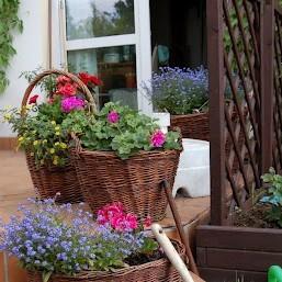 Letni ogród..na przekór zimie :)