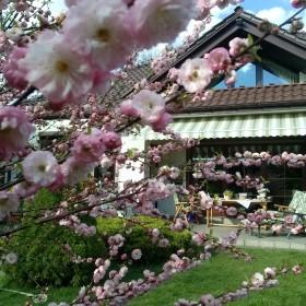 Wiosna,wiosna,wiosna!!!
