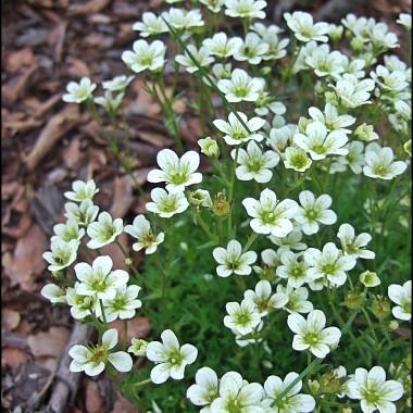 """""""spacer"""" po kwitnących roślinach w moim ogrodzie od wiosny do lata"""
