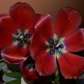 lutowo....kwiatkowo....walentynkowo....