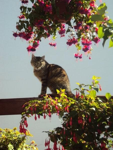 Ogród, Na moim ganku o poranku... ;-)