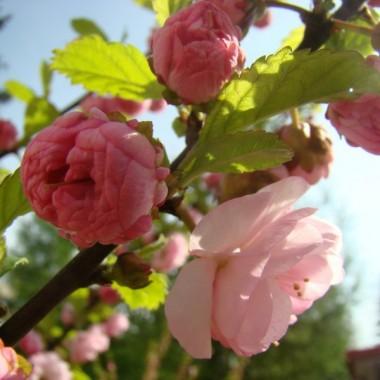 Wiosennie