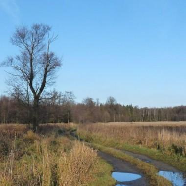 Łąki za wsią