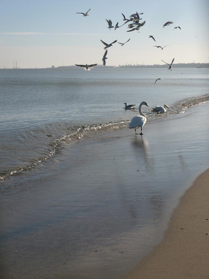 Pozostałe, Wiosennie............ - .................i morze..................pozdrawiam Was cieplutko :)