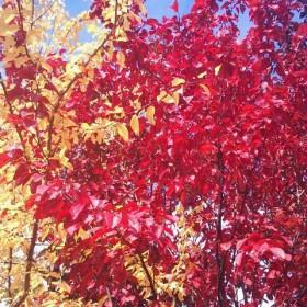 kto powiedział , że jesień jest szara, nudna :) ???