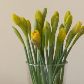 Wiosna w Bremie