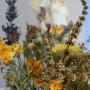 Rośliny, ZATRZYMAĆ LATO