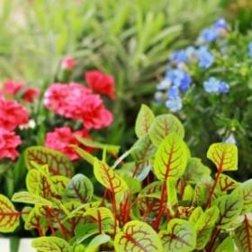 Kwiaty w domu. Dlaczego nie wolno o nich zapominać?