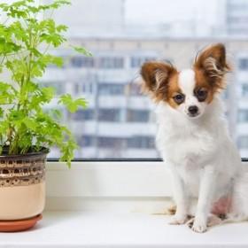 Rośliny trujące dla zwierząt domowych