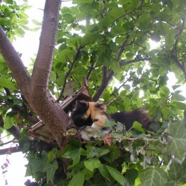 Ogrodniczka Tosia Bambosia