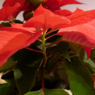 Mikołaj nie zapomniał również o kwiatach