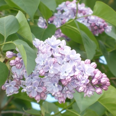 ...............i bez w kolorze liliowym, pastelowym............