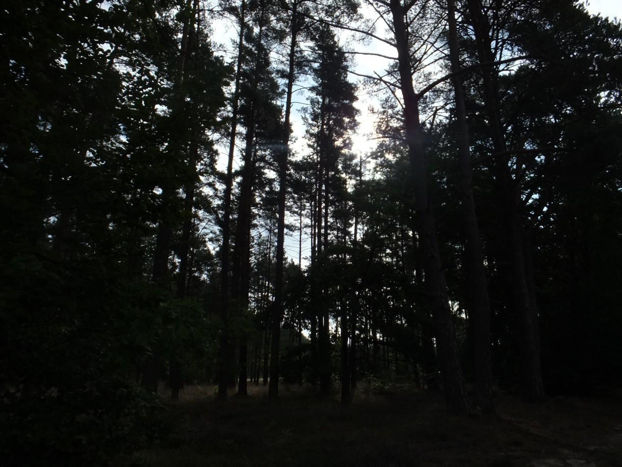 Leśne klimaty, Wspomnienia z wakacji w Kopalinie
