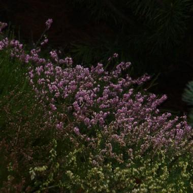 Pierwsze kwiaty i kwitnące krzewy