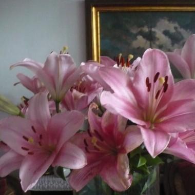 ................i lilie .............wszystkie pąki się rozwijają................