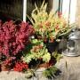 Rośliny, Jesienne kwiaty na balkon - Pamiętajmy, że wrzosy nie lubią cienia, dlatego doniczka z wrzosami powinna stać na słonecznym miejscu i osłoniętym od wiatru.  Fot.123RF.com