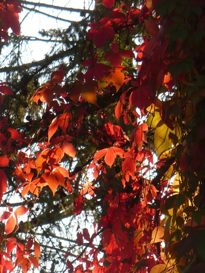 Pozostałe, Galeria jesienna.................październikowa............. - ...........i czerwone wino w słońcu................