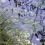 Leśne klimaty, Spokój,cisza..... - ...jezioro,kolory lata?