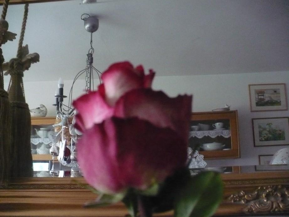 Pozostałe, Listopadowe małe radości................ - ................i róża................