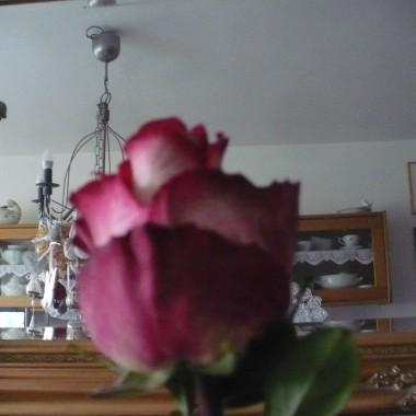 ................i róża................
