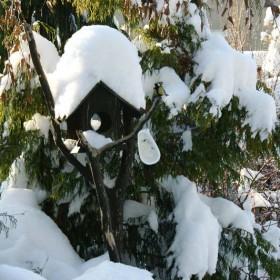 Cztery pory w ogrodzie