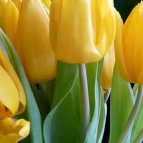 Wiosennie i kwieciście