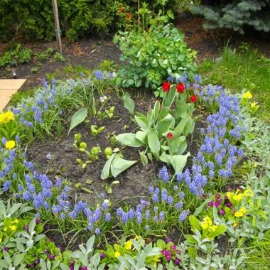wiosna w ogródku
