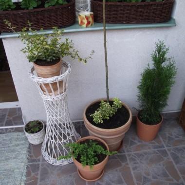 Zapraszam do mojego ogródka balkonowego