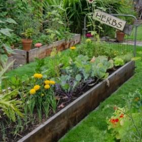 Ogród z ekspertem: Własny warzywnik