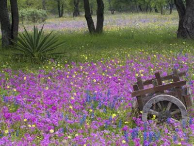 Rośliny, Ukwiecone pola....