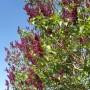 Dekoracje, Majowa................ - .................kwitnący krzew bzu...................