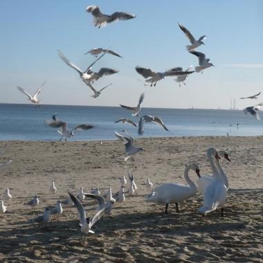 .............i ptaki nad morzem............