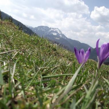 Przywołuję wiosnę