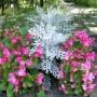 Rośliny, Zapraszam na spacer:)