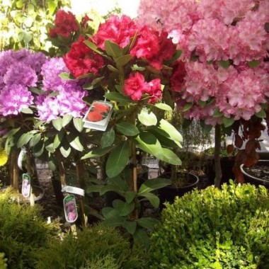 """Zapraszam Was na Wały Chrobrego w Szczecinie gdzie, w tej chwili, odbywa się kiermasz florystyczny pod nazwą """"Pamiętajcie o ogrodach"""". W ramach tej imprezy zorganizowano pierwszą plenerową wystawę florystyczną na najpiękniejszy bukiet lub kompozycję kwiatową, której tematyka nawiązuje do marki Szczecina """"Floating Garden""""  czyli """"Pływające ogrody"""". Miłego oglądania."""