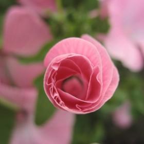kwiaty z rabaty dedykowane dla wszystkich dziewczyn z duszą art