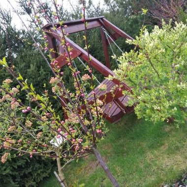 Wiosenne ujęcia z ogrodu