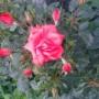 Rośliny, Lato w pelni