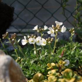 moja wiosna w ogrodzie