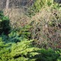 Pozostałe, Zielona zima :) - .