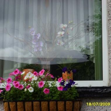 okna salonowe