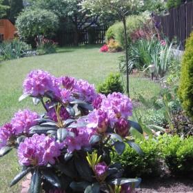 Majowy ogródek!