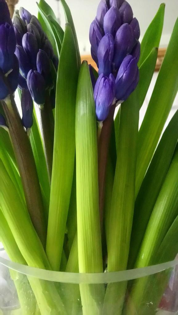 Dekoratorzy, Czekając na wiosnę .................. - ...................i hiacynty...............
