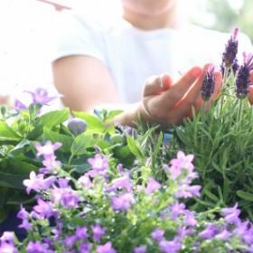 Dzięki tym zabiegom rośliny na tarasie będą dłużej kwitły