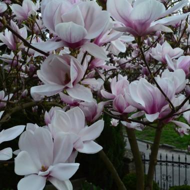 U nas też wiosna:)