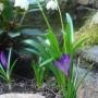 Rośliny, wiosna w  ogrodzie -  to już przeszłość