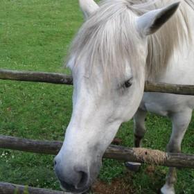 najpiękniejsze zwierzęta na świecie :)